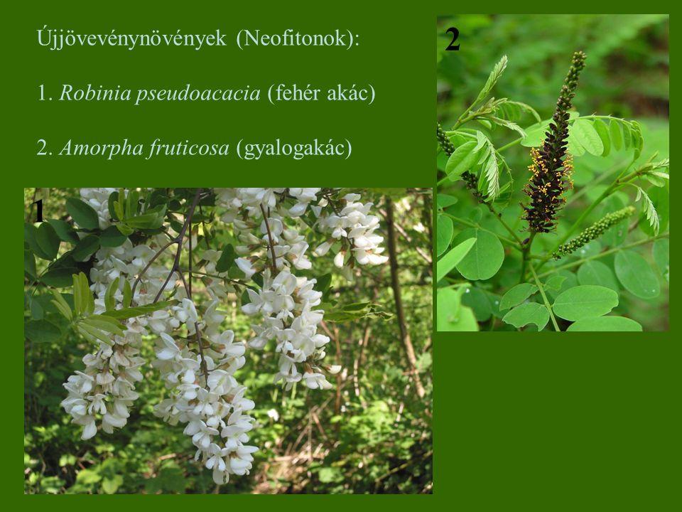2 1 Újjövevénynövények (Neofitonok):