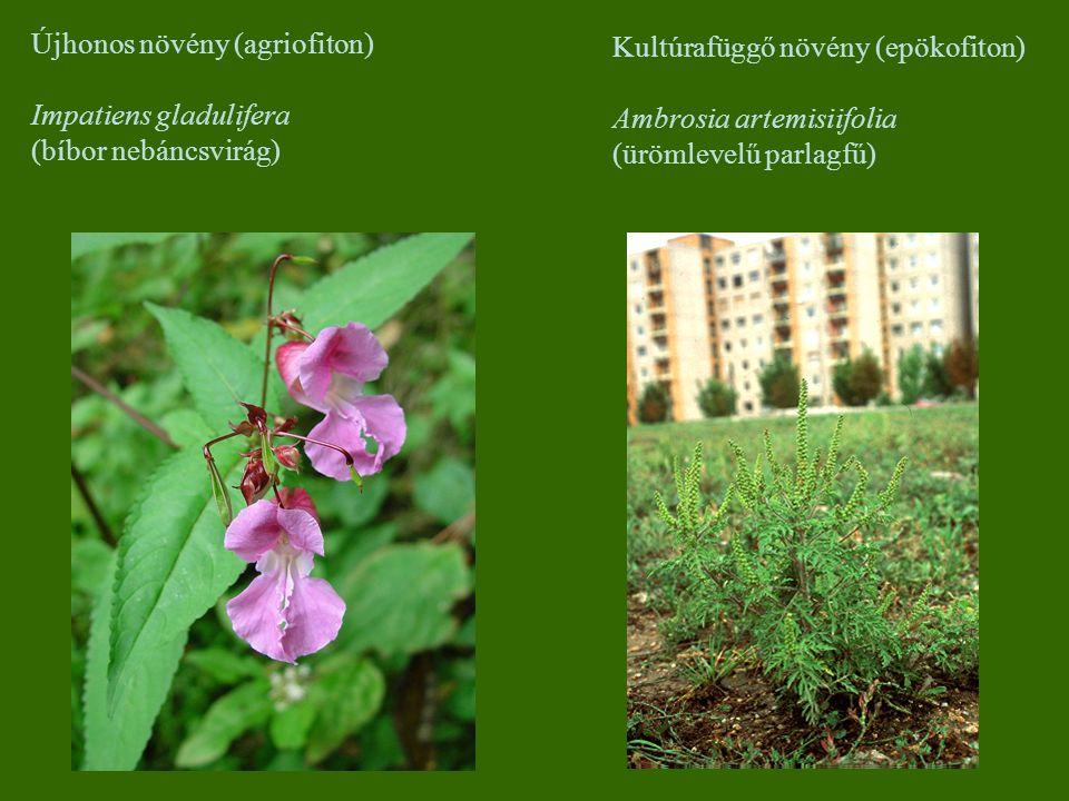 Újhonos növény (agriofiton)