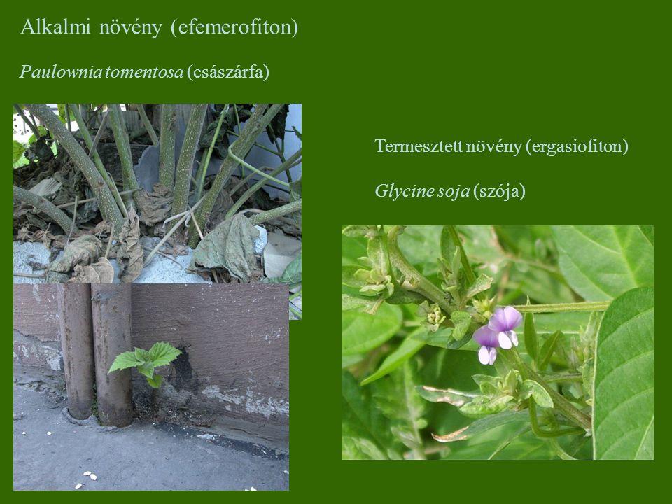 Alkalmi növény (efemerofiton)