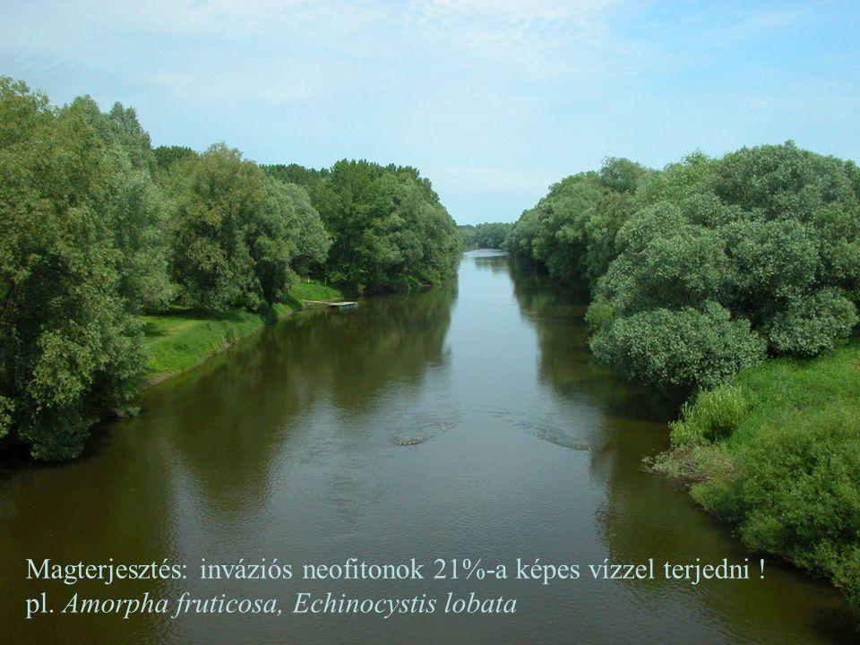 Magterjesztés: inváziós neofitonok 21%-a képes vízzel terjedni !