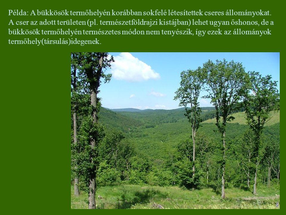 Példa: A bükkösök termőhelyén korábban sokfelé létesítettek cseres állományokat.