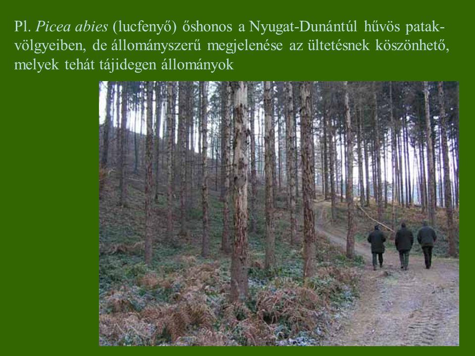 Pl. Picea abies (lucfenyő) őshonos a Nyugat-Dunántúl hűvös patak-