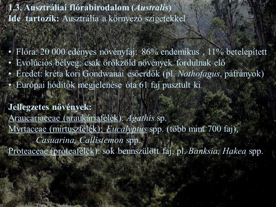 1.3. Ausztráliai flórabirodalom (Australis)