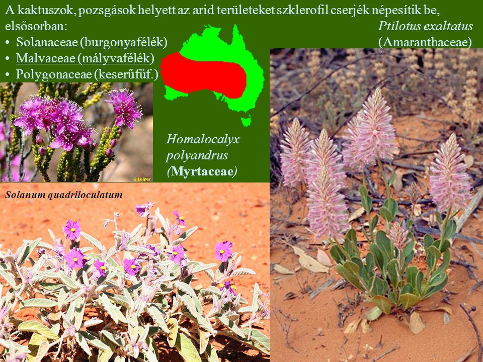 Solanaceae (burgonyafélék) Malvaceae (mályvafélék)