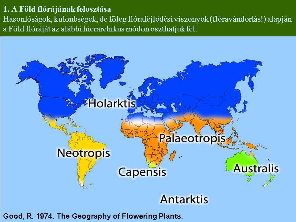 1. A Föld flórájának felosztása Hasonlóságok, különbségek, de főleg flórafejlődési viszonyok (flóravándorlás!) alapján a Föld flóráját az alábbi hierarchikus módon oszthatjuk fel.
