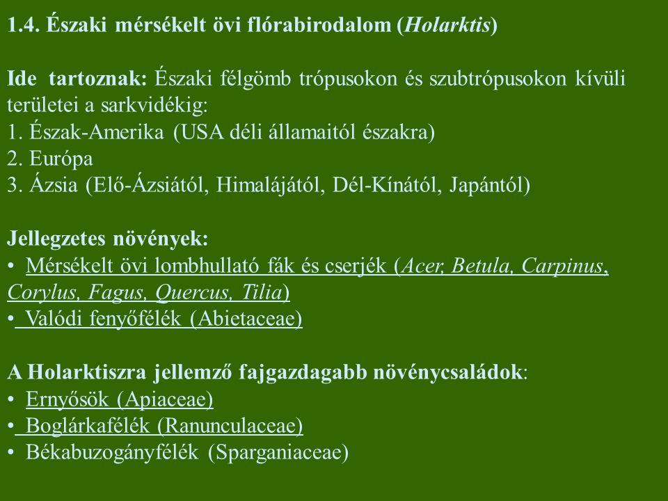 1.4. Északi mérsékelt övi flórabirodalom (Holarktis)