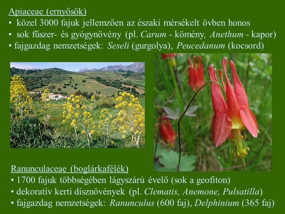 Apiaceae (ernyősök) közel 3000 fajuk jellemzően az északi mérsékelt övben honos. sok fűszer- és gyógynövény (pl. Carum - kömény, Anethum - kapor)