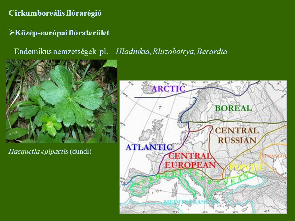 Cirkumboreális flórarégió Közép-európai flóraterület