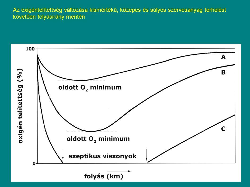 Az oxigéntelítettség változása kismértékű, közepes és súlyos szervesanyag terhelést követően folyásirány mentén