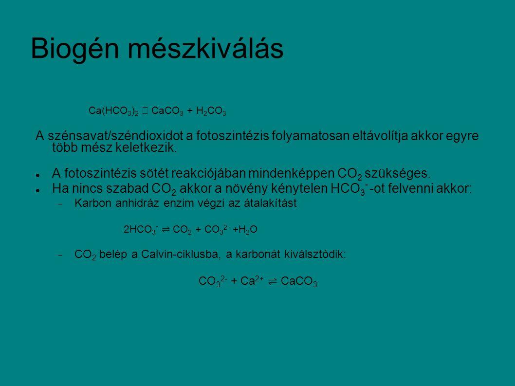 Biogén mészkiválás Ca(HCO3)2 → CaCO3 + H2CO3. A szénsavat/széndioxidot a fotoszintézis folyamatosan eltávolítja akkor egyre több mész keletkezik.