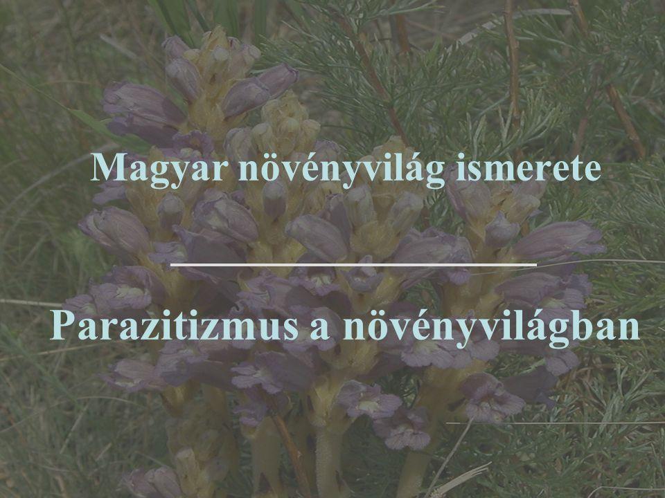 Magyar növényvilág ismerete Parazitizmus a növényvilágban