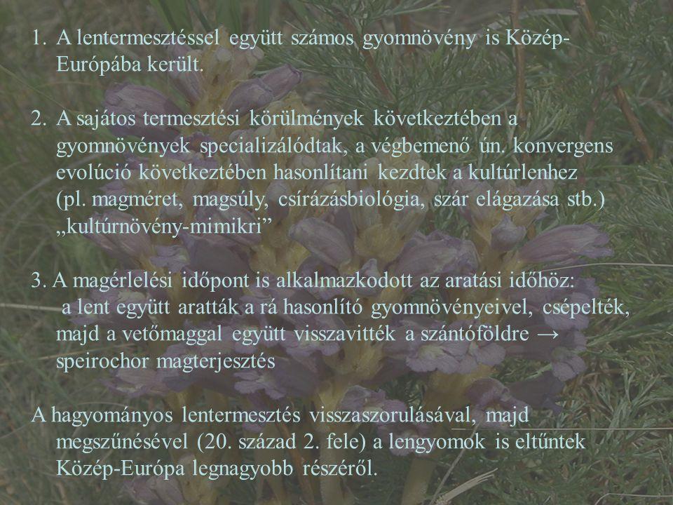 A lentermesztéssel együtt számos gyomnövény is Közép-Európába került.