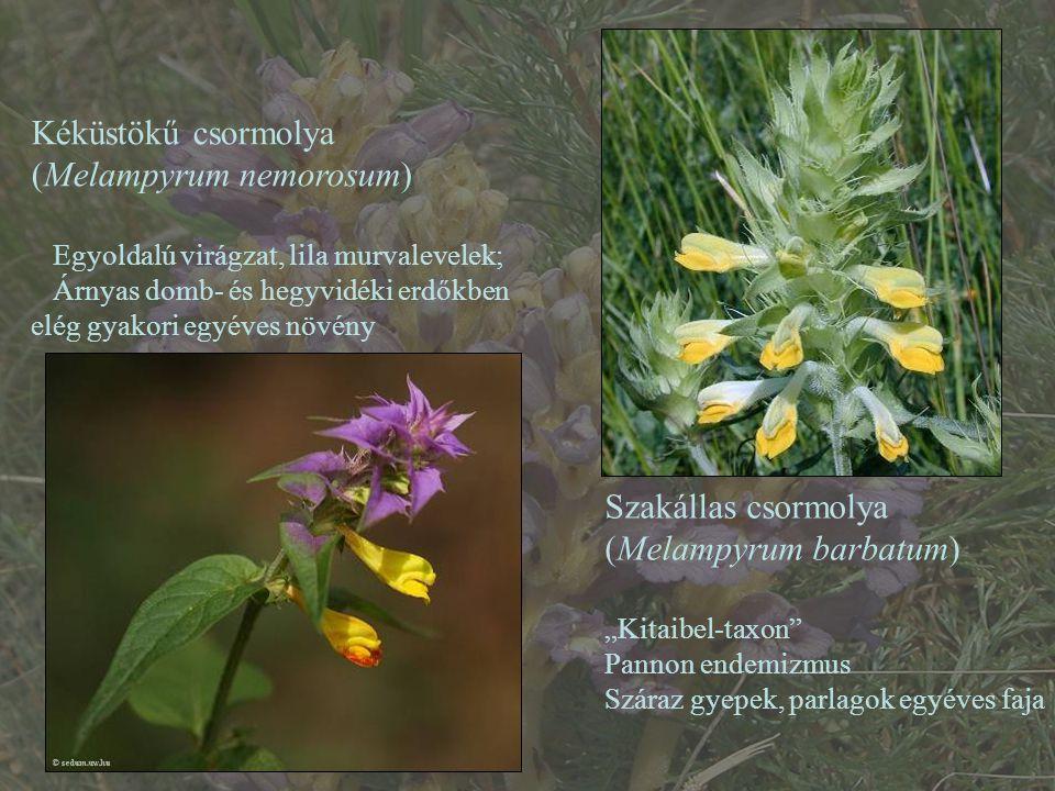 Kéküstökű csormolya (Melampyrum nemorosum)