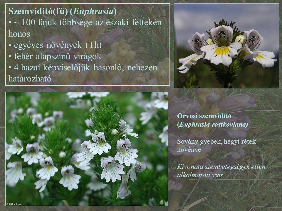 Szemvidító(fű) (Euphrasia)