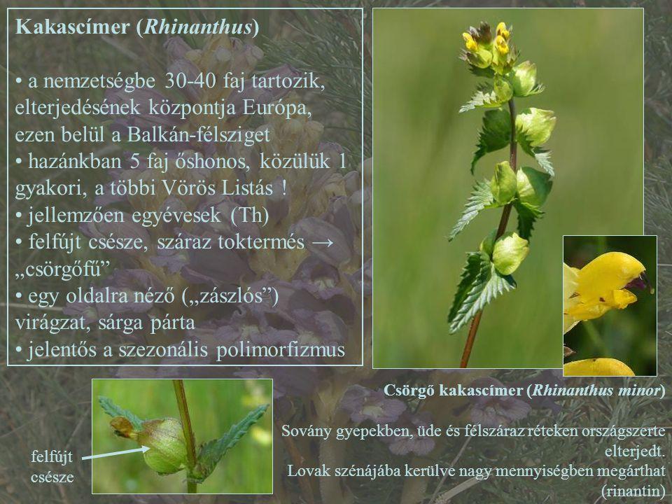 Kakascímer (Rhinanthus)