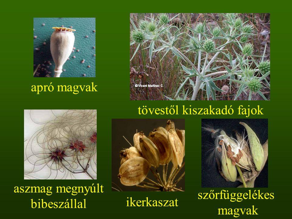 tövestől kiszakadó fajok