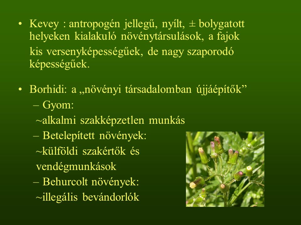 Kevey : antropogén jellegű, nyílt, ± bolygatott helyeken kialakuló növénytársulások, a fajok