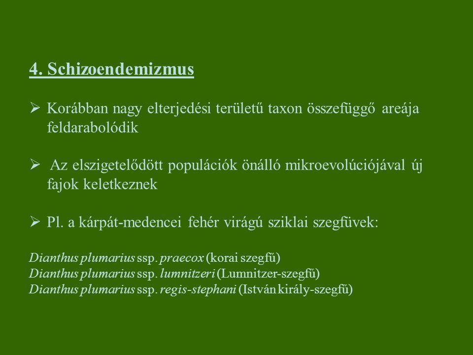 4. Schizoendemizmus Korábban nagy elterjedési területű taxon összefüggő areája feldarabolódik.