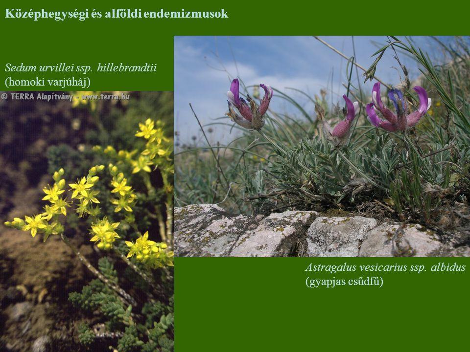 Középhegységi és alföldi endemizmusok