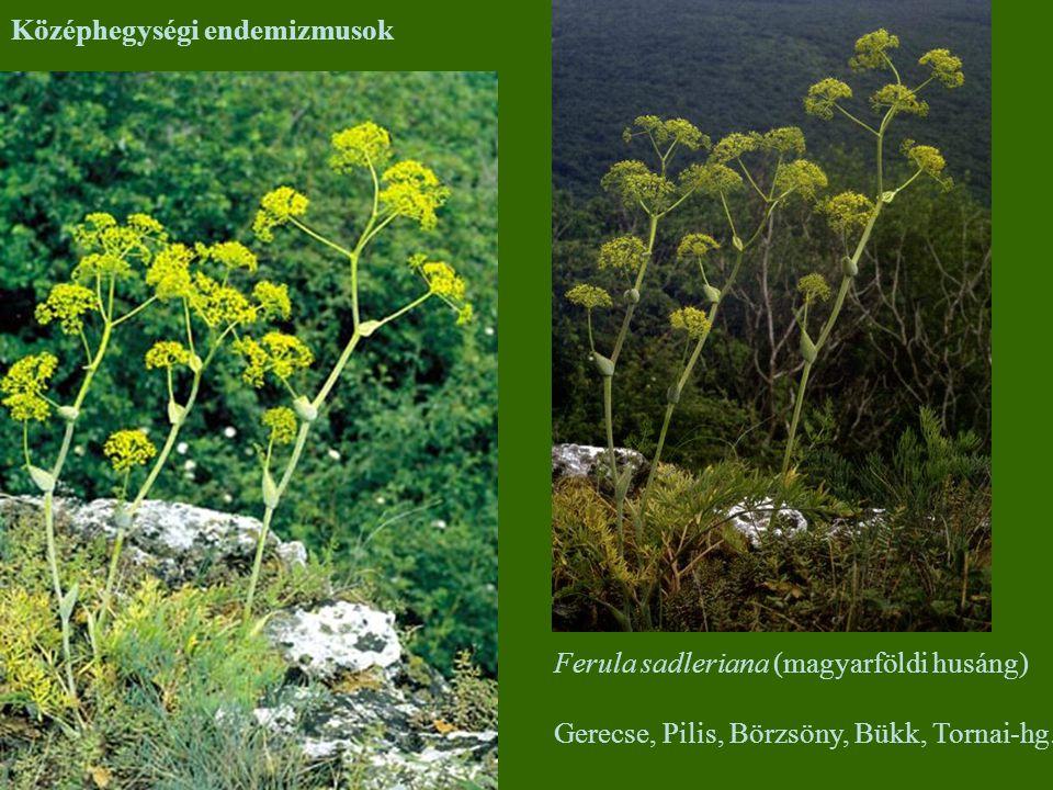 Középhegységi endemizmusok
