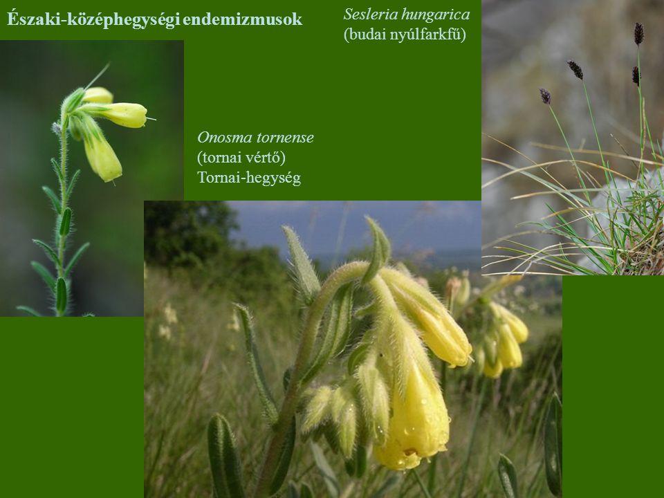 Északi-középhegységi endemizmusok