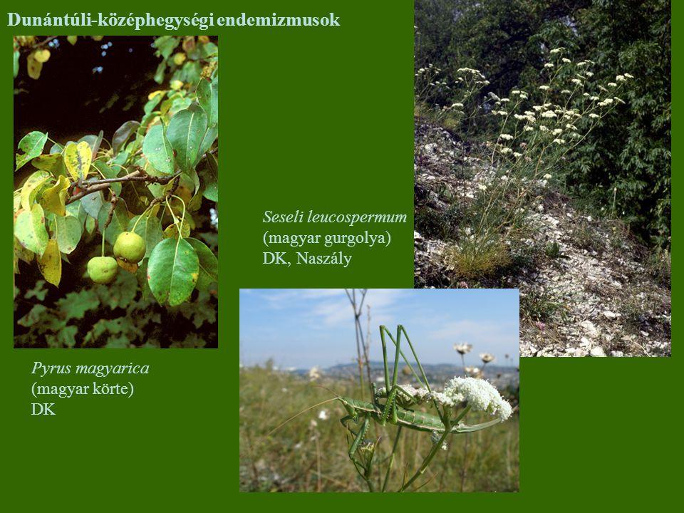 Dunántúli-középhegységi endemizmusok