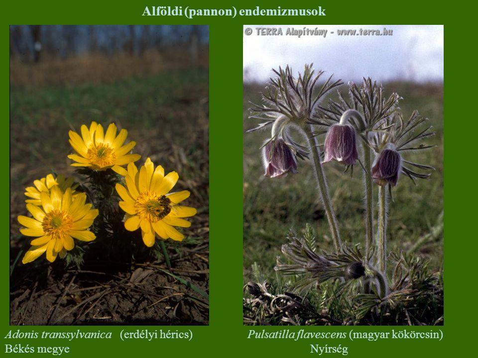 Alföldi (pannon) endemizmusok