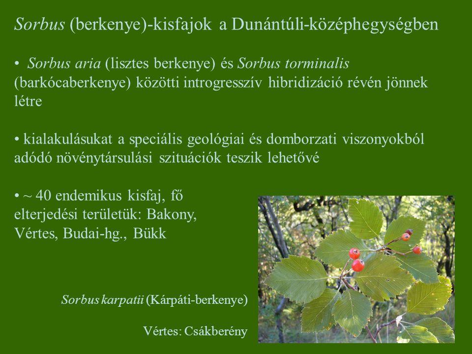 Sorbus (berkenye)-kisfajok a Dunántúli-középhegységben