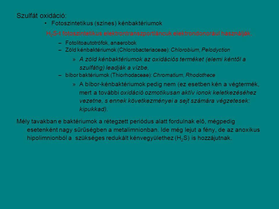 Szulfát oxidáció: Fotoszintetikus (színes) kénbaktériumok