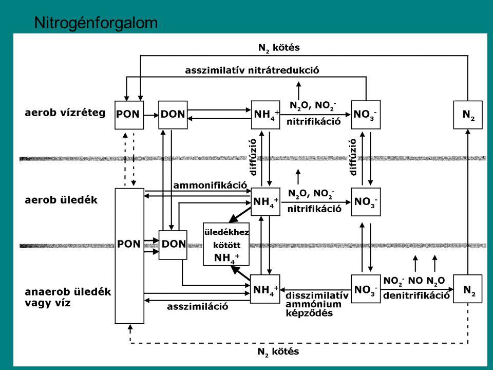 Nitrogénforgalom