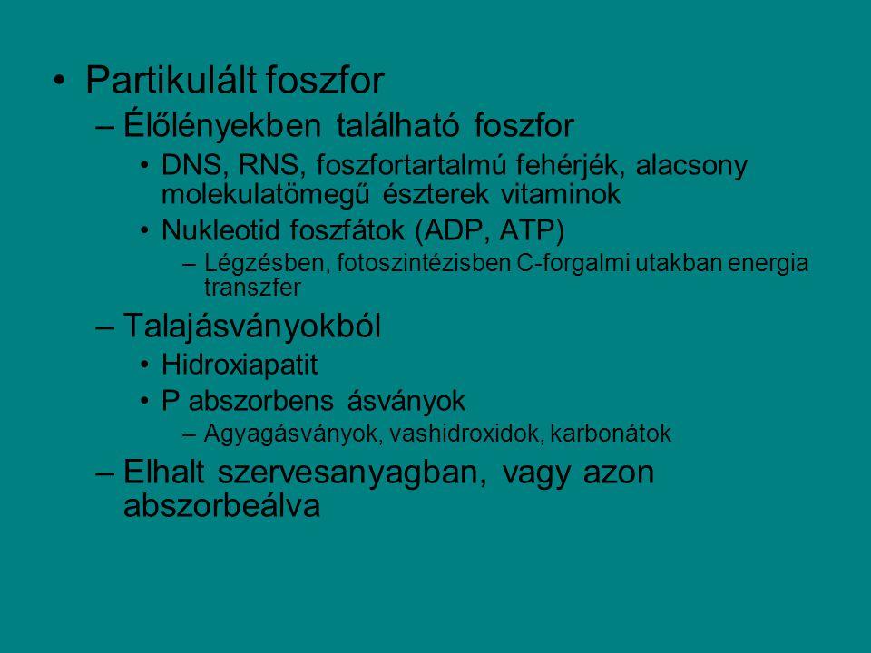 Partikulált foszfor Élőlényekben található foszfor Talajásványokból