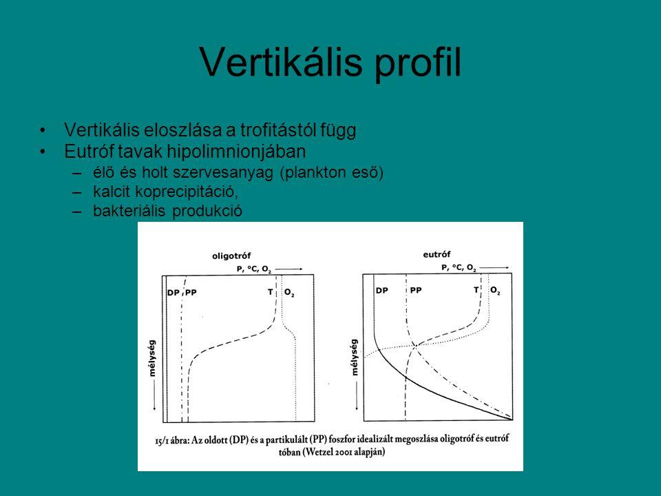 Vertikális profil Vertikális eloszlása a trofitástól függ