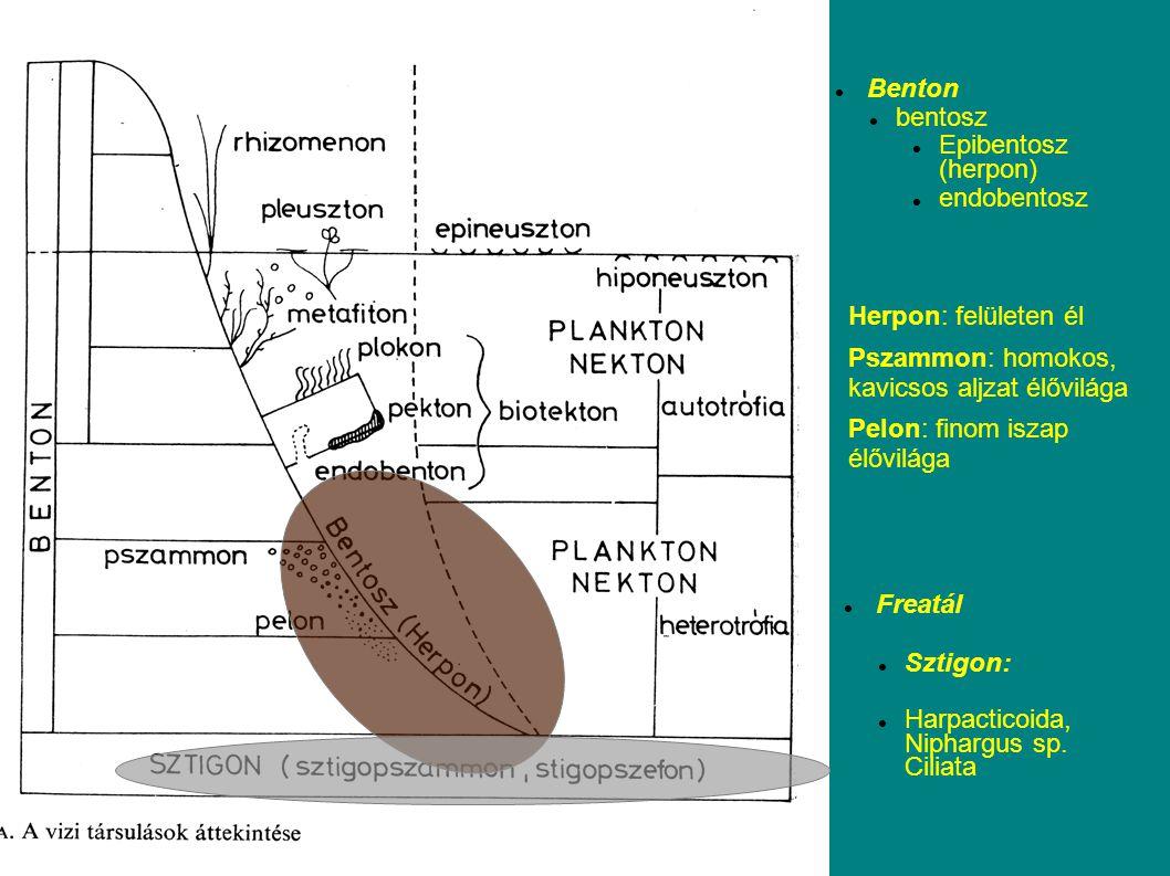 Benton bentosz. Epibentosz (herpon) endobentosz. Herpon: felületen él. Pszammon: homokos, kavicsos aljzat élővilága.