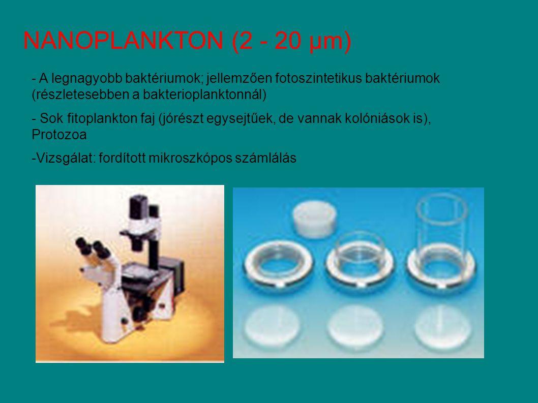 NANOPLANKTON (2 - 20 µm) A legnagyobb baktériumok; jellemzően fotoszintetikus baktériumok (részletesebben a bakterioplanktonnál)