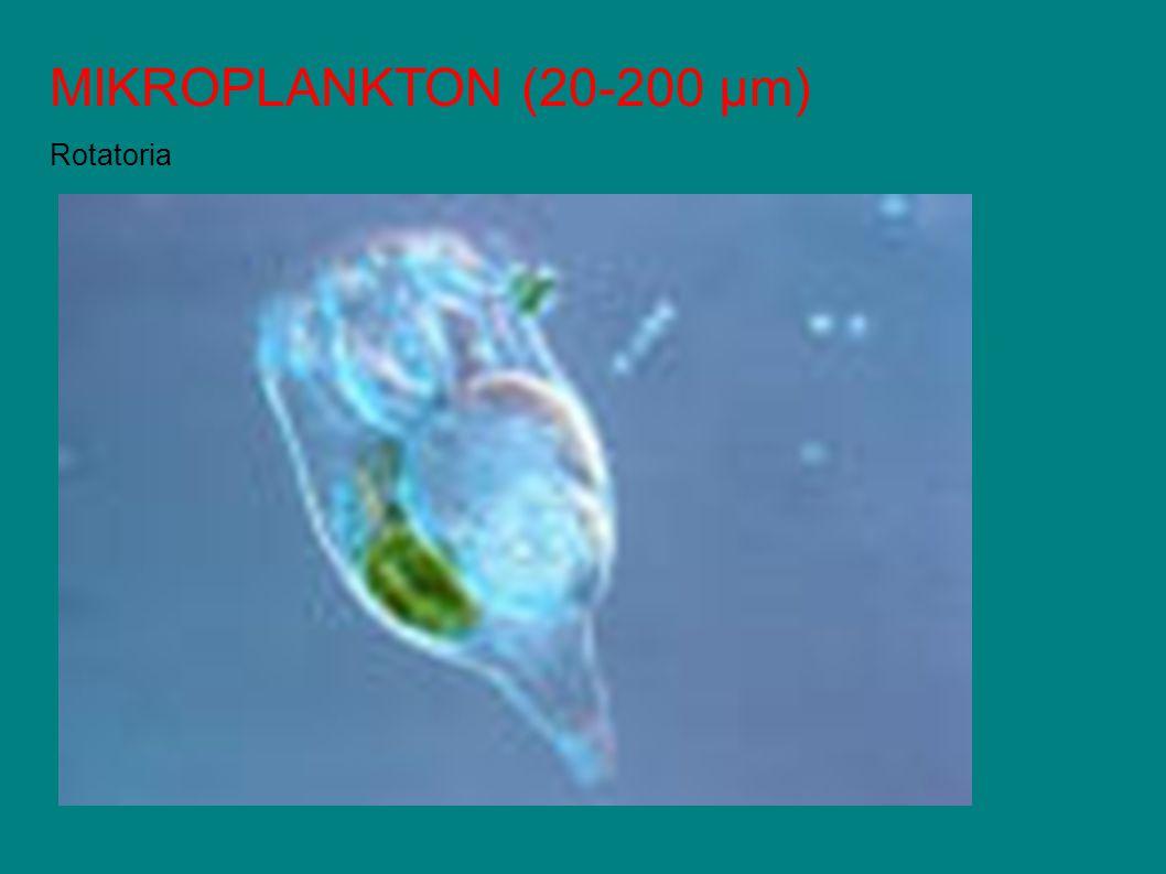 MIKROPLANKTON (20-200 µm) Rotatoria