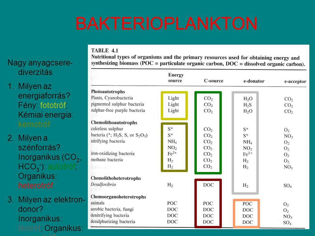 BAKTERIOPLANKTON Nagy anyagcsere- diverzitás