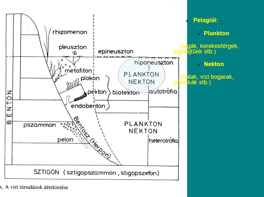 Pelagiál: Plankton. (algák, kerekesférgek, egysejtűek stb.) Nekton.