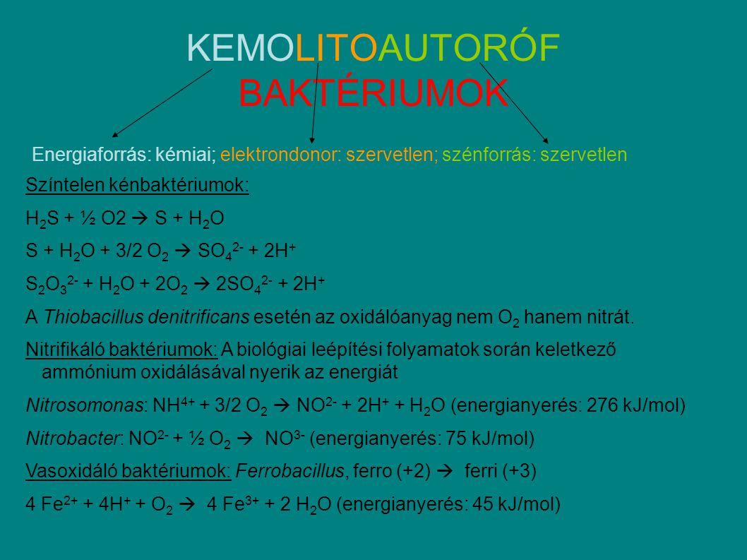 KEMOLITOAUTORÓF BAKTÉRIUMOK