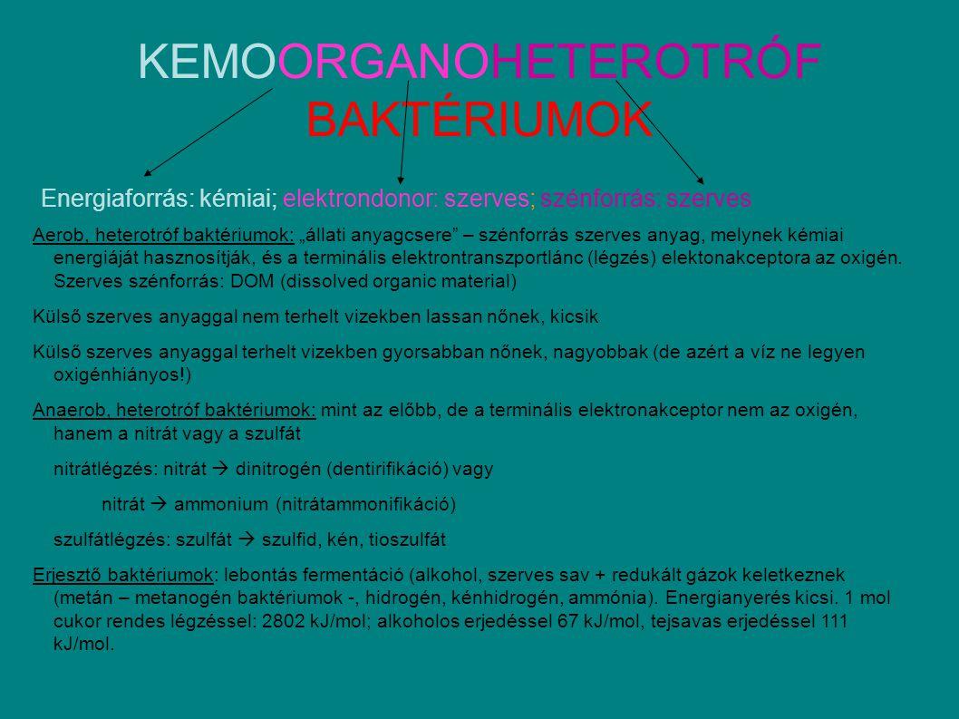 KEMOORGANOHETEROTRÓF BAKTÉRIUMOK