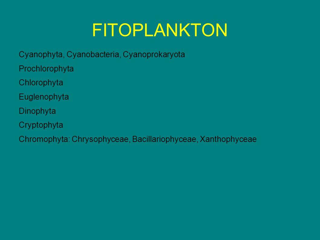 FITOPLANKTON Cyanophyta, Cyanobacteria, Cyanoprokaryota Prochlorophyta