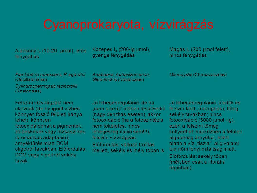 Cyanoprokaryota, vízvirágzás