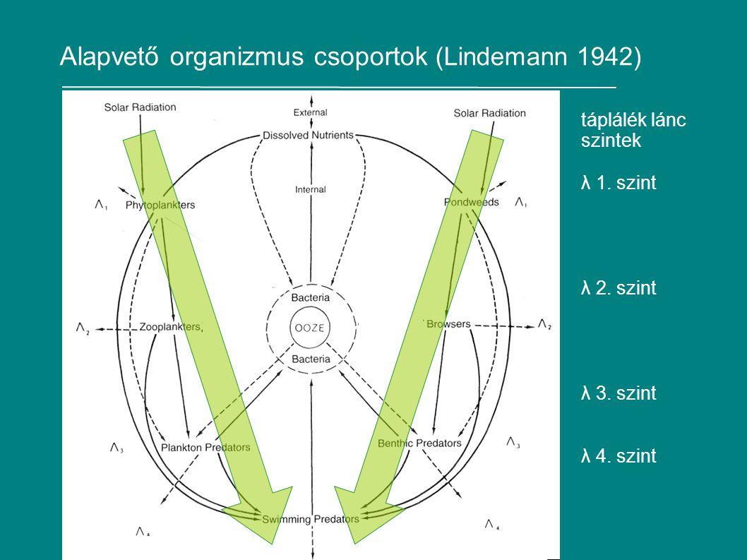 Alapvető organizmus csoportok (Lindemann 1942)