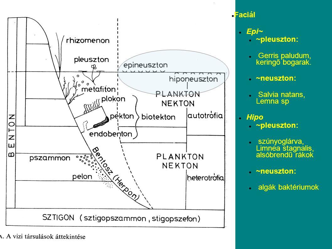 Faciál Epi~ ~pleuszton: Gerris paludum, keringő bogarak. ~neuszton: Salvia natans, Lemna sp. Hipo.