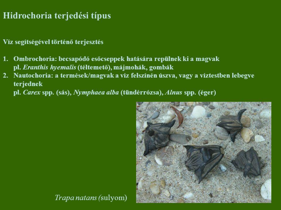 Hidrochoria terjedési típus