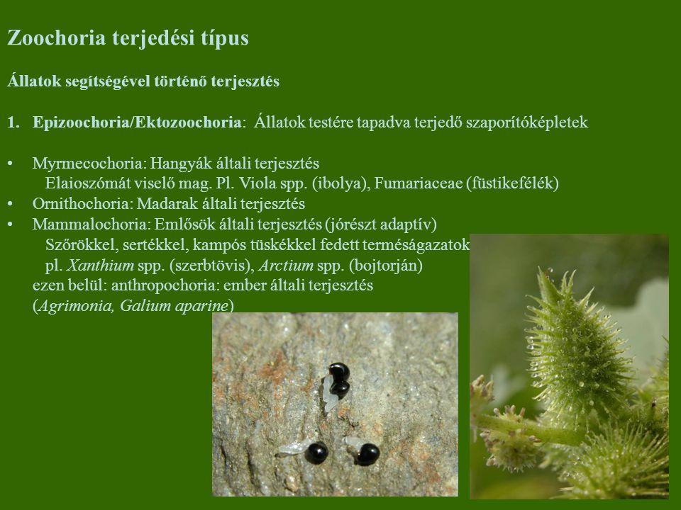 Zoochoria terjedési típus
