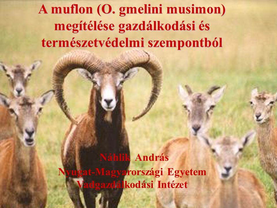 Náhlik András Nyugat-Magyarországi Egyetem Vadgazdálkodási Intézet