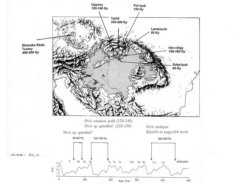 Ovis ammon polii (120-140) Ovis sp. gmelini. (120-130) Ovis antiqua.