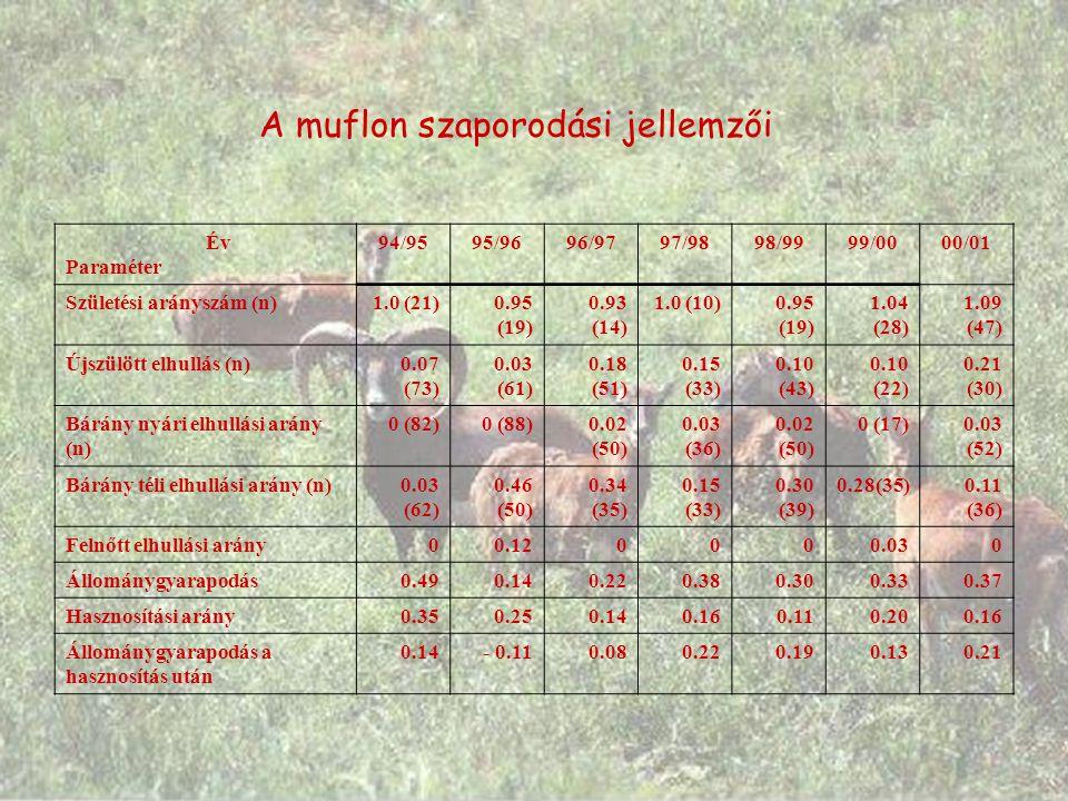 A muflon szaporodási jellemzői