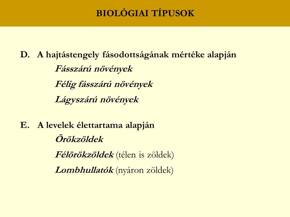 BIOLÓGIAI TÍPUSOK D. A hajtástengely fásodottságának mértéke alapján. Fásszárú növények. Félig fásszárú növények.