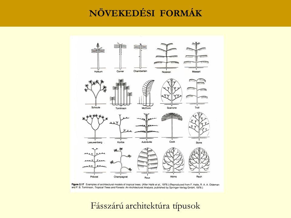 Fásszárú architektúra típusok